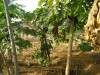 jardin-de-bereli115