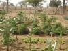 jardin-de-kana5
