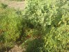 jardin-de-doma-da2