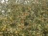 arbres-de-sourou20